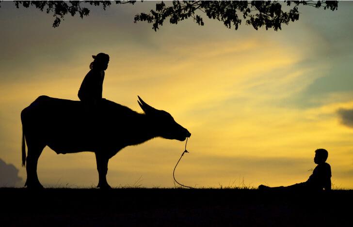 牛に乗った人が朝焼けを眺めているところ