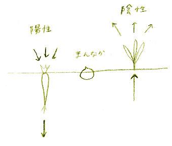 食材による陰陽の違いを表したイメージ