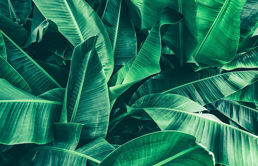 生い茂った緑の濃い葉