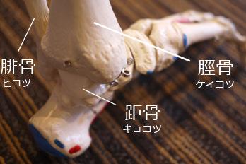 足首の骨の構造