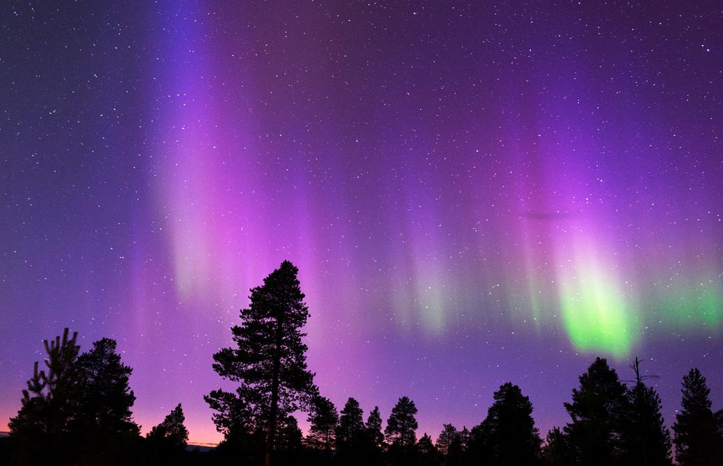 紫色に輝くオーロラの森