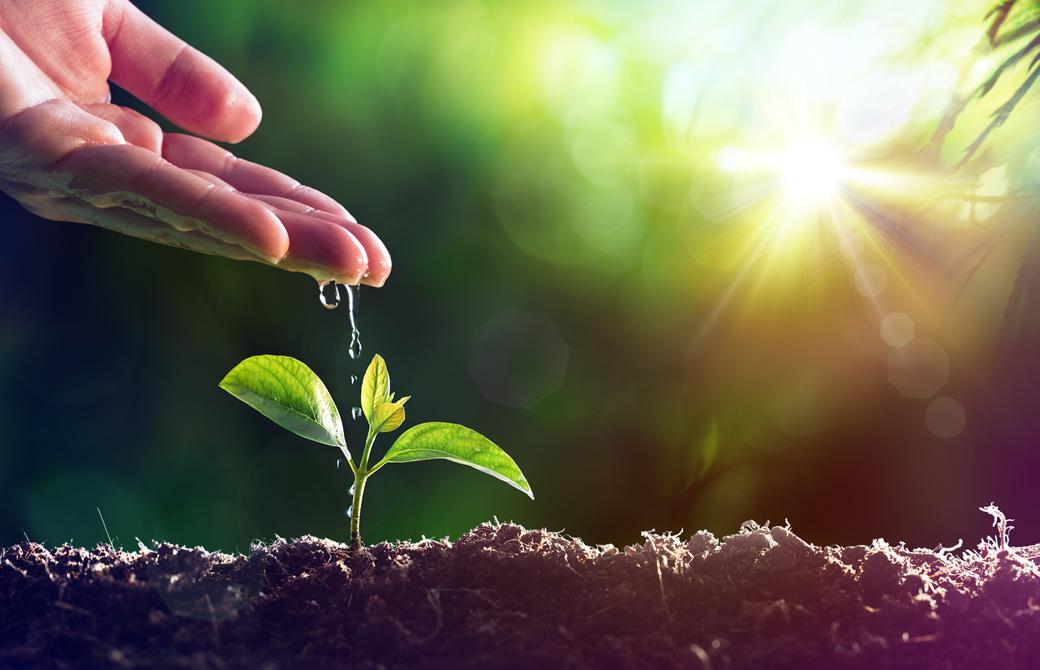 土から頭を出した芽に手のひらから水やりしている