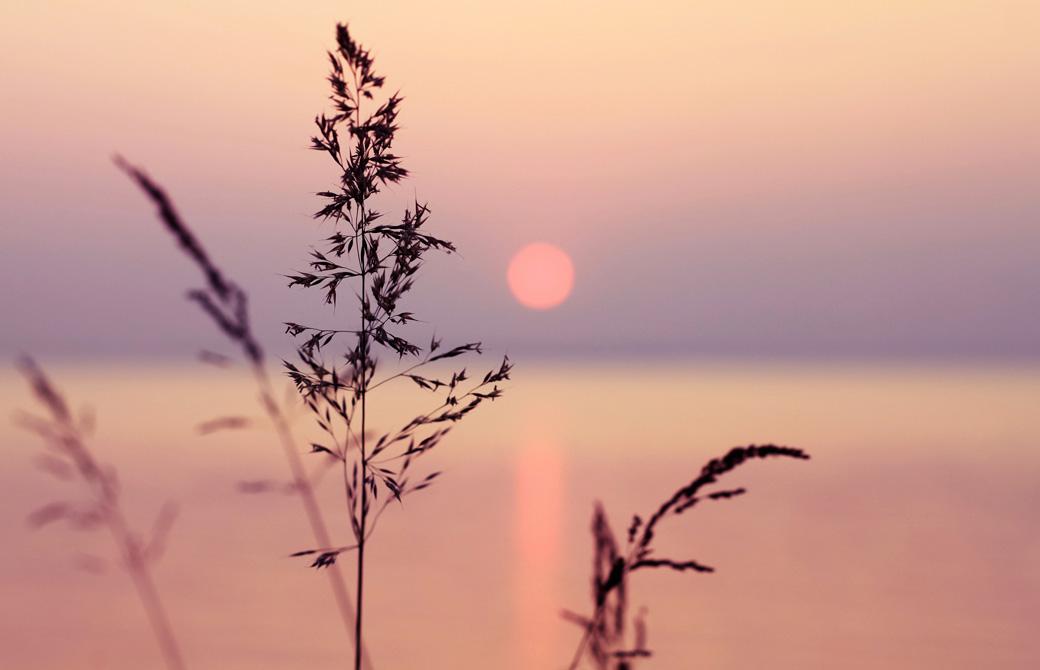 海辺に伸びた植物のシルエットと夕陽