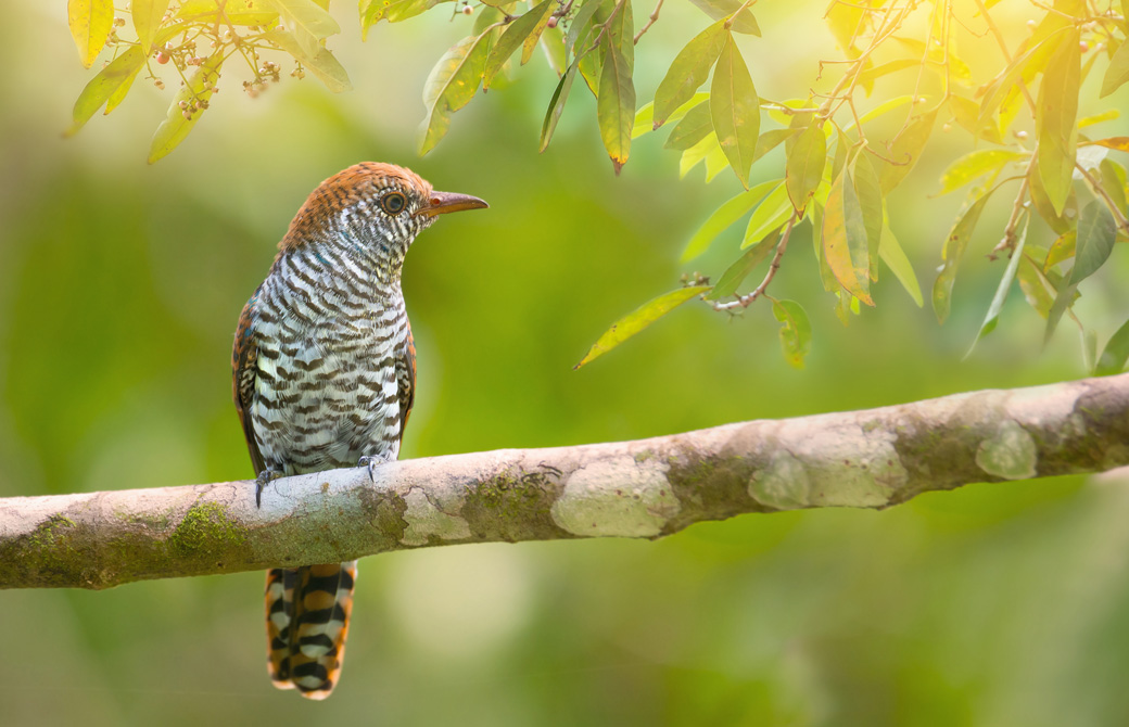 1羽の鳥が木の枝にとまっている