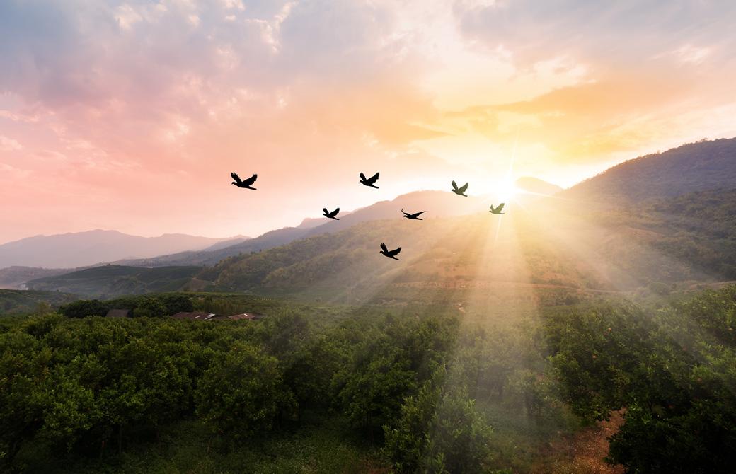 夕焼けに照らされ7羽の鳥が山並みを飛んでいる
