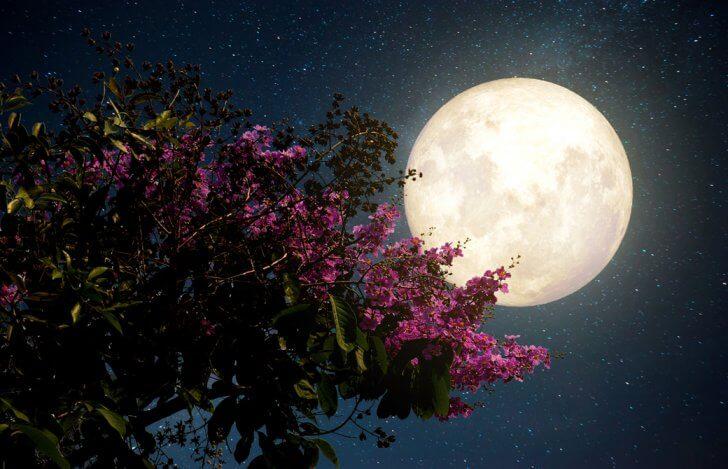 夜に赤いブーゲンビリア越しの満月