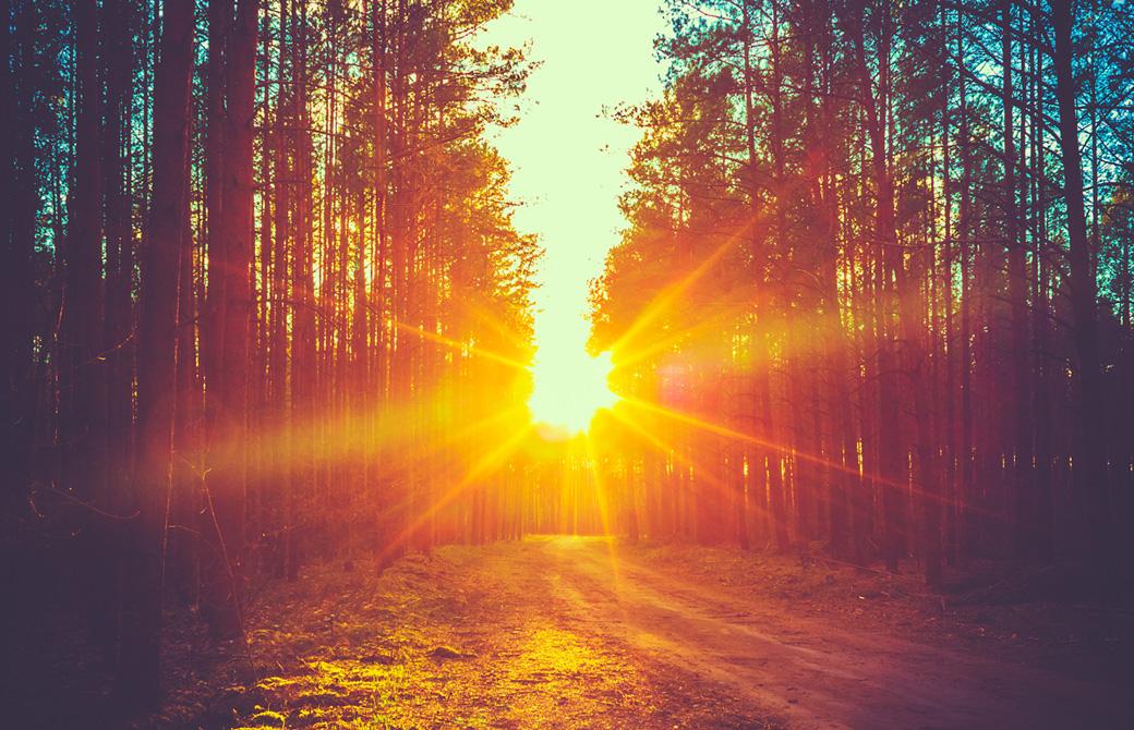 夕日の輝く森林