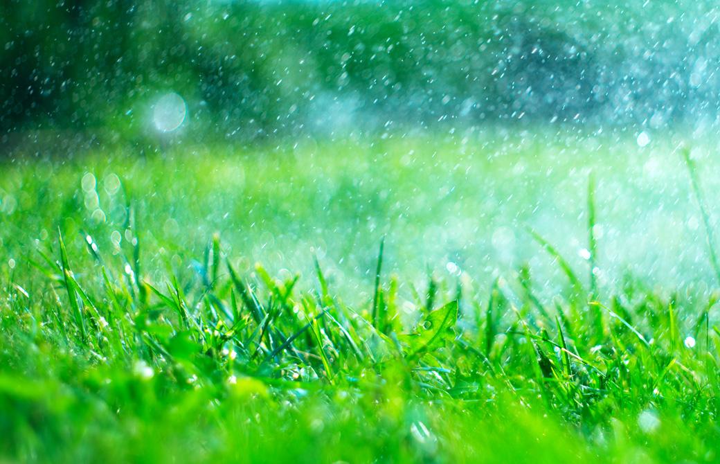 グリーンに雨があたってキラキラしている