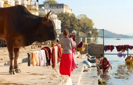 ガンジス川岸辺にいる牛や人や洗濯物