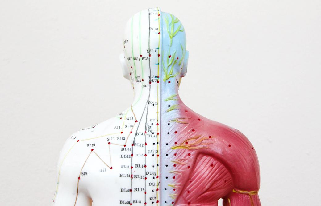 人体模型に経絡が描かれている背中側の胸より上