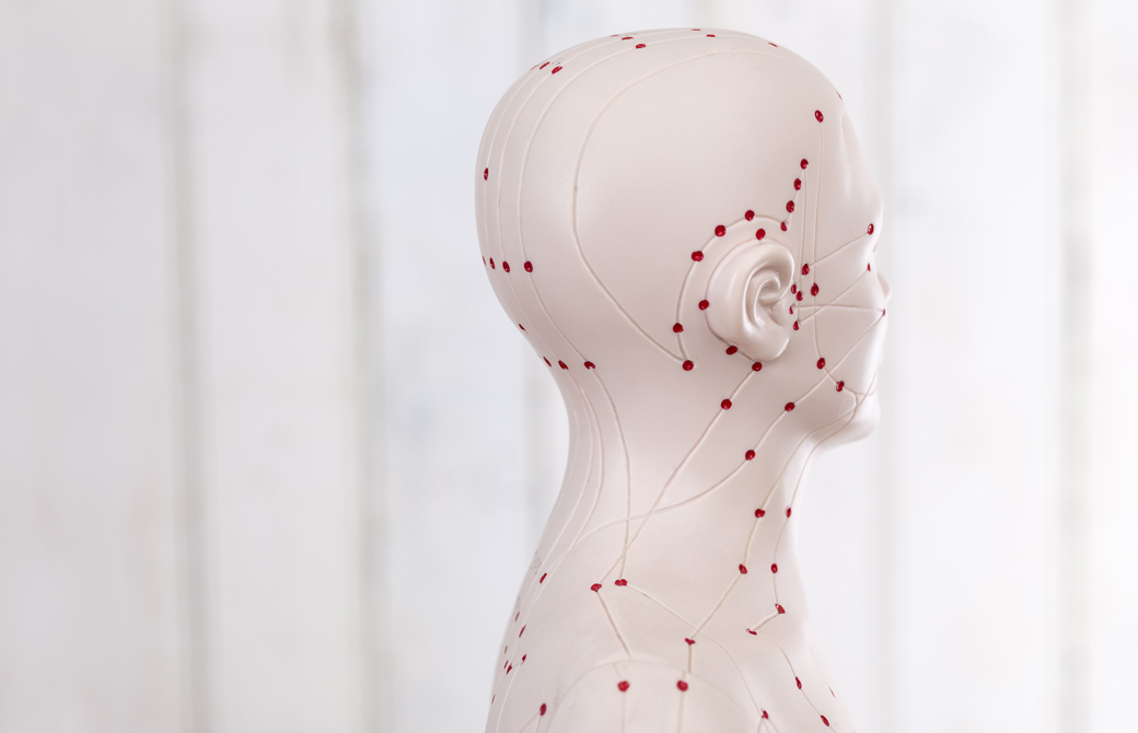 人体模型のツボ