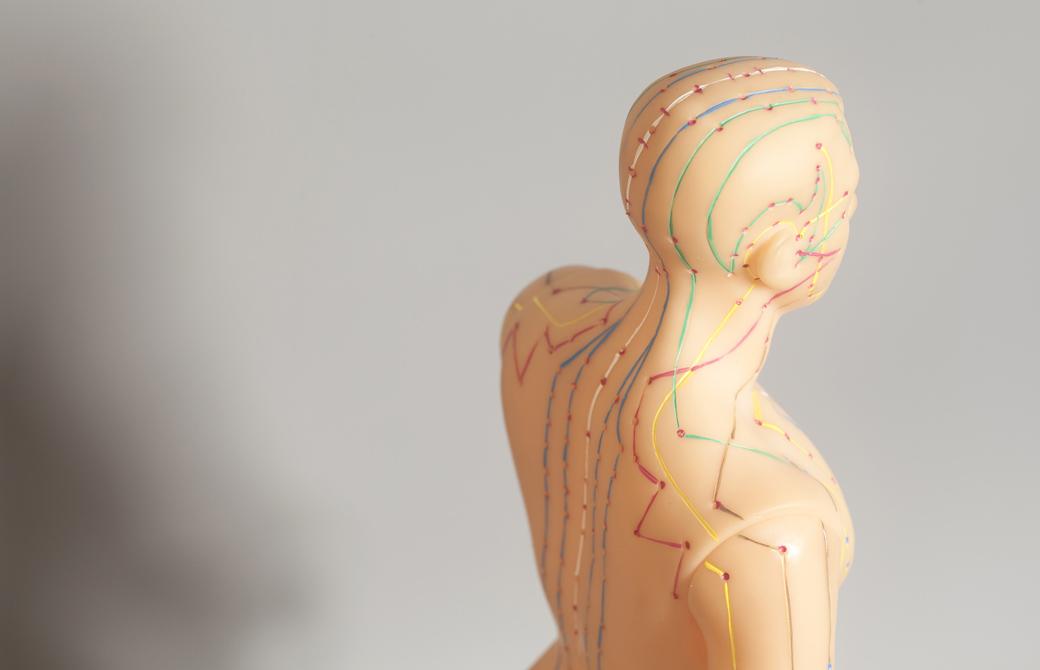 経絡が示された人体模型