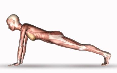 上肢帯に働く筋肉