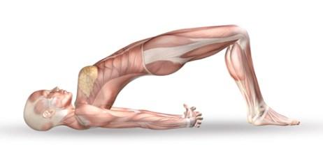 膝関節に働く筋肉