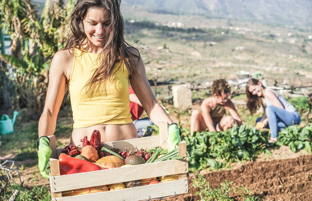 オーガニックファームで野菜を収穫している人たち