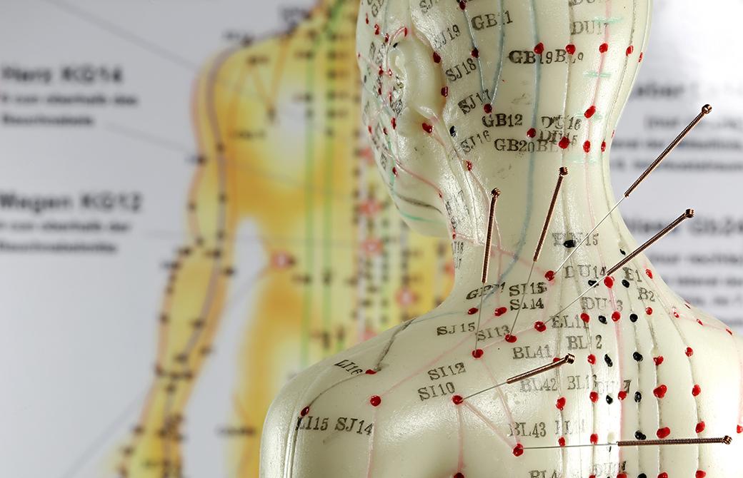 経絡を示した人体模型