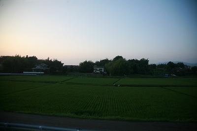熊本の田んぼ