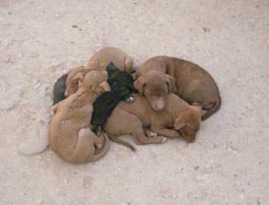 寄り添っている親犬と子犬たち