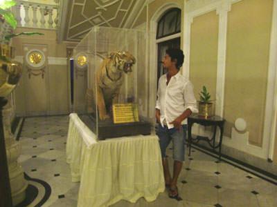 虎のはく製を見つめる更科有哉
