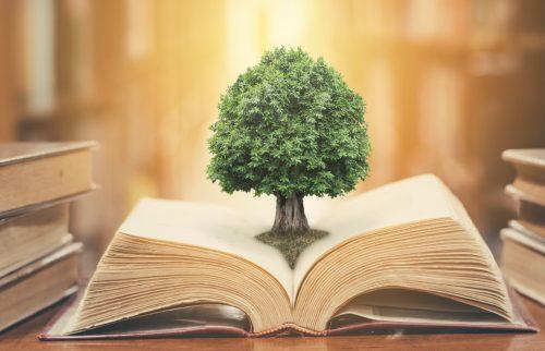 図書館の本の中から木が出てきている写真