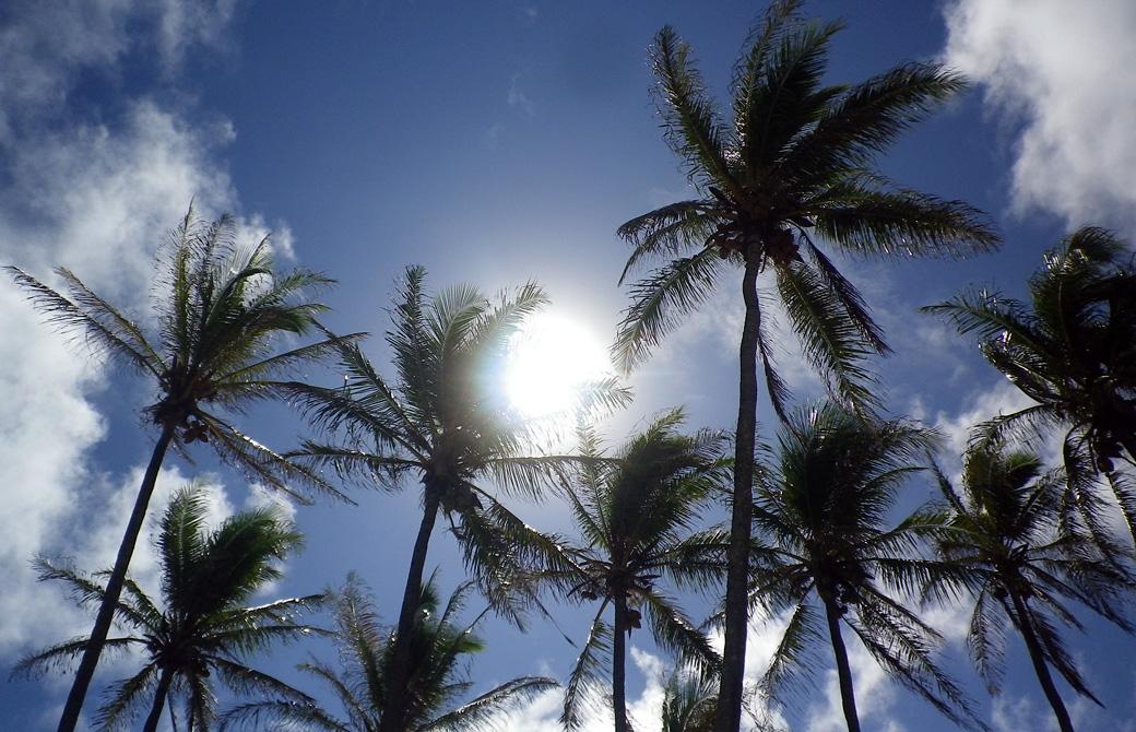 ハワイの高い太陽とヤシの木