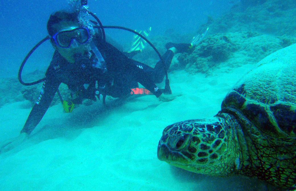 Mahokoがスキューバダイビングでウミガメと遭遇した様子