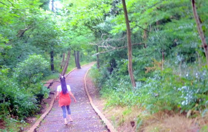 森の中を散策