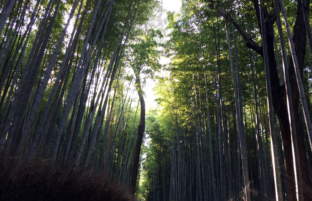 mahokoのブログ 京都嵐山の竹林