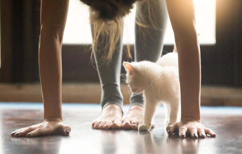 部屋で立位の前屈をしている女性とその足下でじゃれる猫