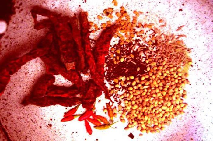 おならが止まる?お腹に溜まるガスを減らすスパイスをご紹介:サントーシマ香【インド アーユルヴェーダ紀行】