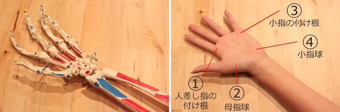 手のひらの骨模型と手