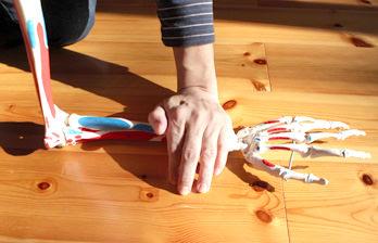 骨模型を上から手で押さえている