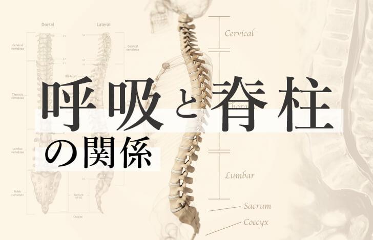 背骨の使い方で呼吸が深まる!呼吸と脊柱の解剖学的な関係
