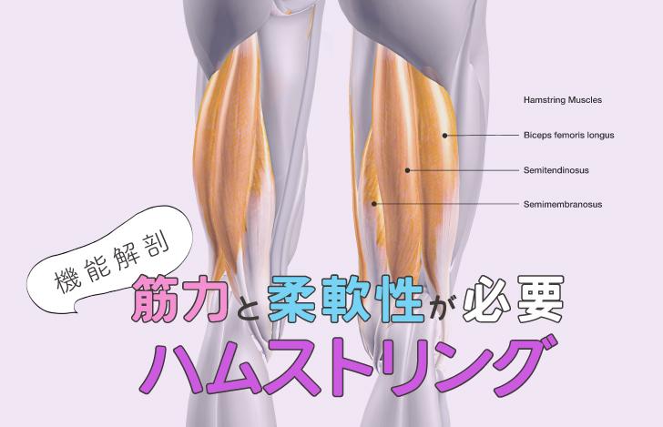 筋力と柔軟性が必要なハムストリングス