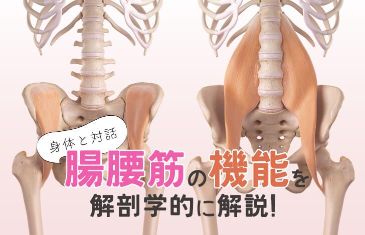 身体と対話:腸腰筋の機能を解剖学的に解説!