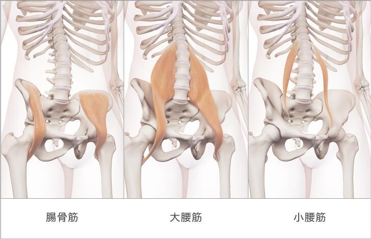 腸腰筋とは「腸骨筋・大腰筋・小腰筋」の総称である