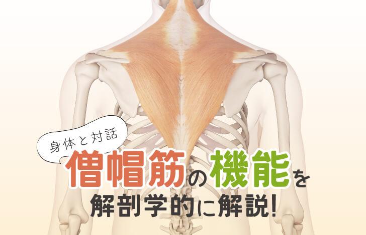 身体との対話:僧帽筋の機能を解剖学的に解説!