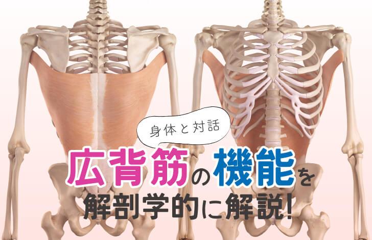 身体と対話:広背筋の機能を解剖学的に解説!