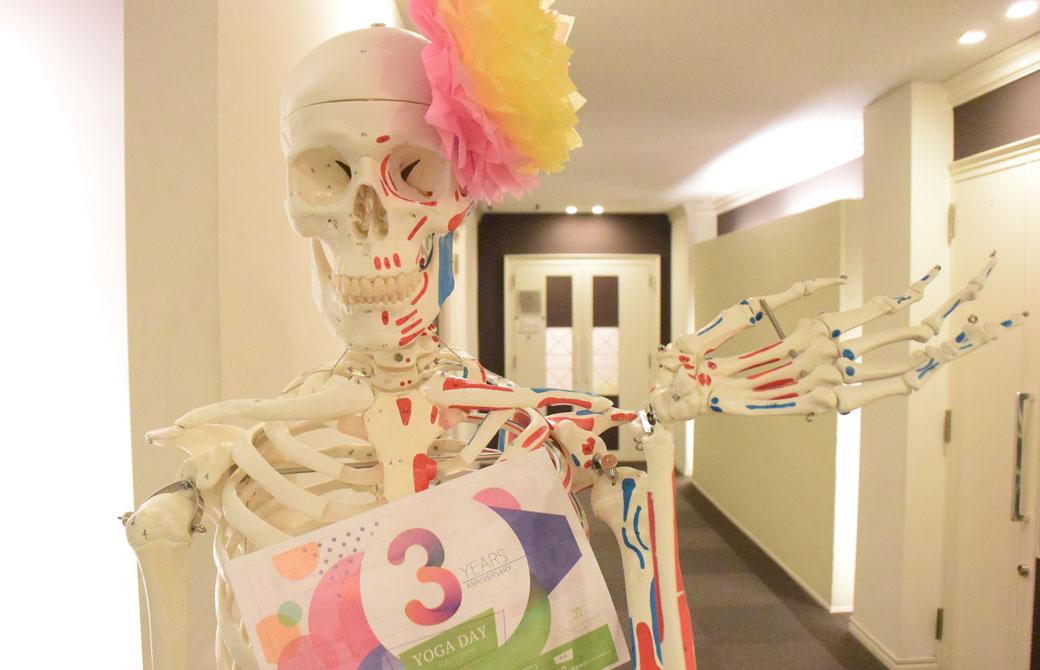ヨガアカデミー大阪のジョセフィーヌという骨模型