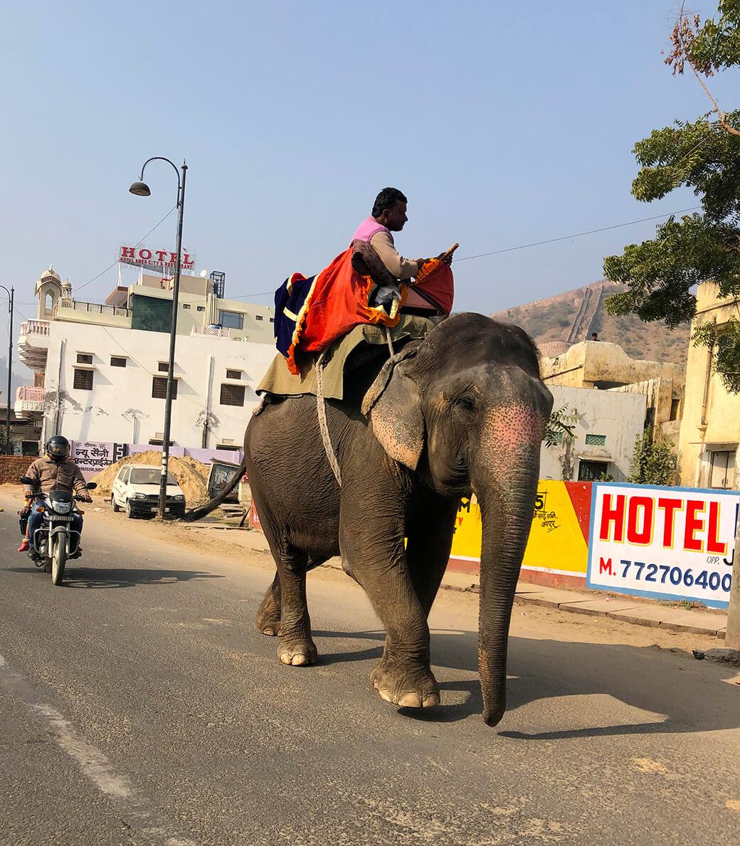 ジャイプールの街を散歩していて出会った象