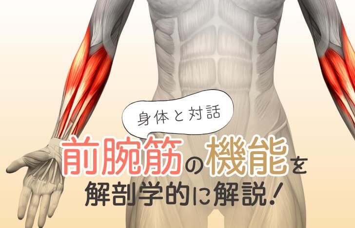 身体との対話:前腕筋の機能を解剖学的に解説!
