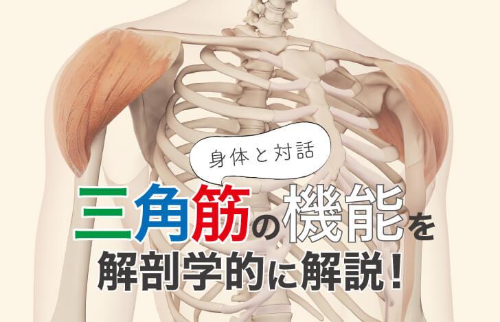 身体と対話:三角筋の機能を解剖学的に解説!