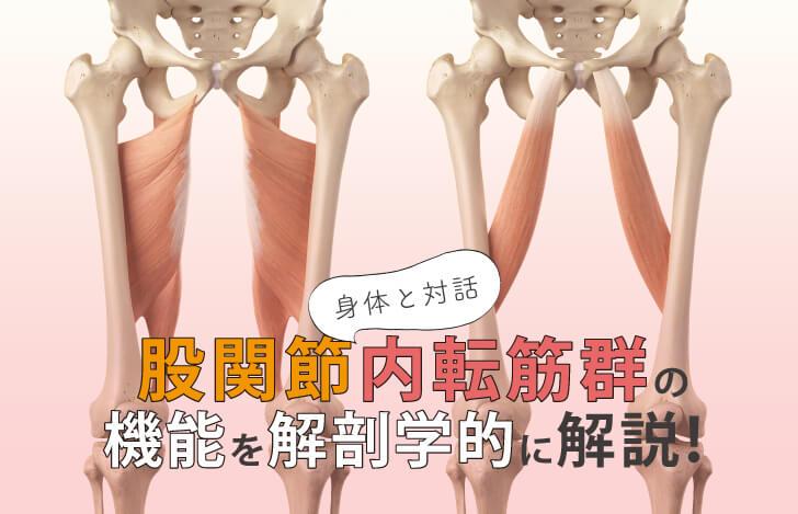 身体と対話:股関節内転筋群の機能を解剖学的に解説!