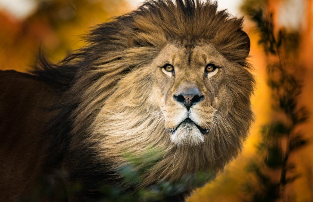 少年少女たちに生きる本質を体感させた、偉大なライオン王アスラン