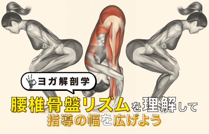 【ヨガ解剖学】腰椎骨盤リズムを理解して指導の幅を広げよう