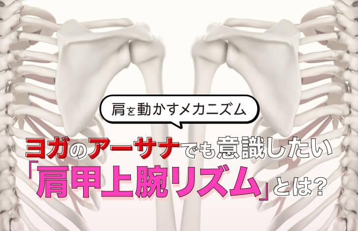 肩を動かすメカニズム〜ヨガのアーサナでも意識したい「肩甲上腕リズム」とは?〜