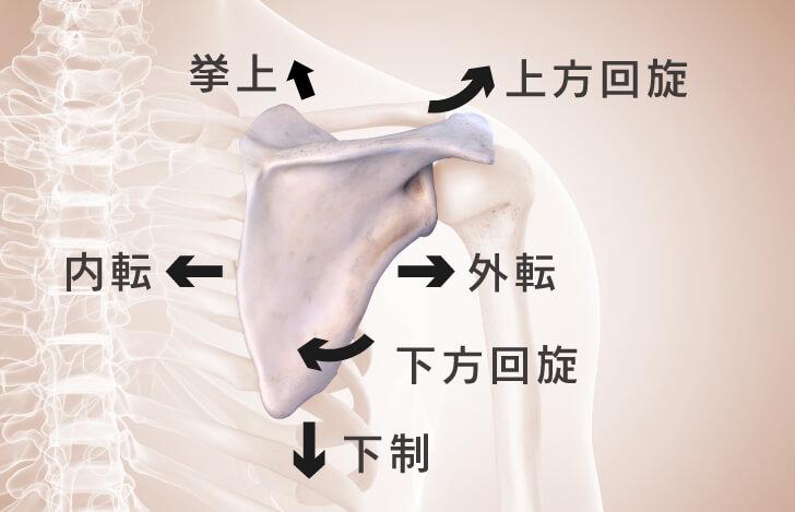 肩甲胸郭関節