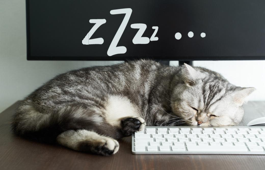 猫がパソコンの上で寝ている