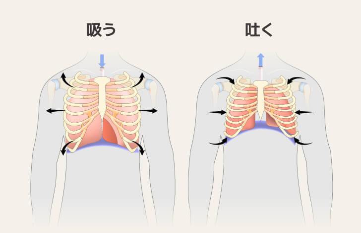 呼吸時の胸の様子