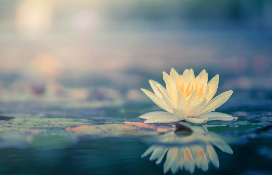 古代インドから愛される蓮の花(パドマ)